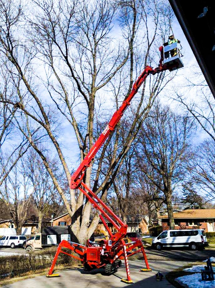 Lincoln Landscaping Crew trimming a tree