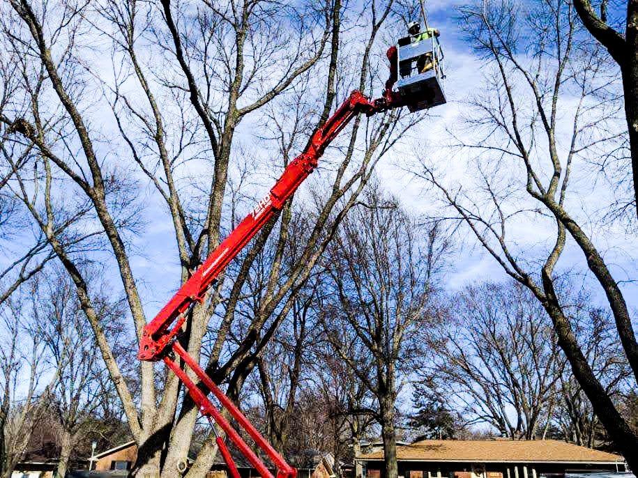 Tree Removal in Lincoln Nebraska